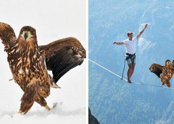 Орёл гордой походкой прошёлся по снегу и из-за этого стал главным героем битвы фотошоперов (15фото)