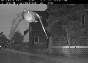 Не гони, тебя ждут дома: в Германии оштрафовали голубя за превышение скорости (1 фото)
