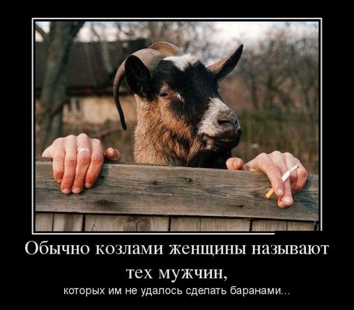 Обычно козлами женщины называют тех мужчин, которых им не удалось сделать баранами...