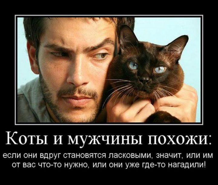 Коты и мужчины похожи: если они вдруг становятся ласковыми, значит, или им от вас что-то нужно, или они уже где-то нагадили!