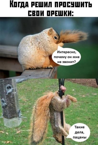 Когда решил просушить свои орешки: -Интересно, почему он мне не звонит?