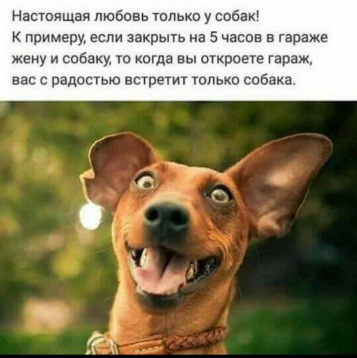 Настоящая любовь только у собак! К примеру, если закрыть на 5 часов в гараже жену и собаку, то когда вы откроете гараж, вас с радостью встретит только собака.