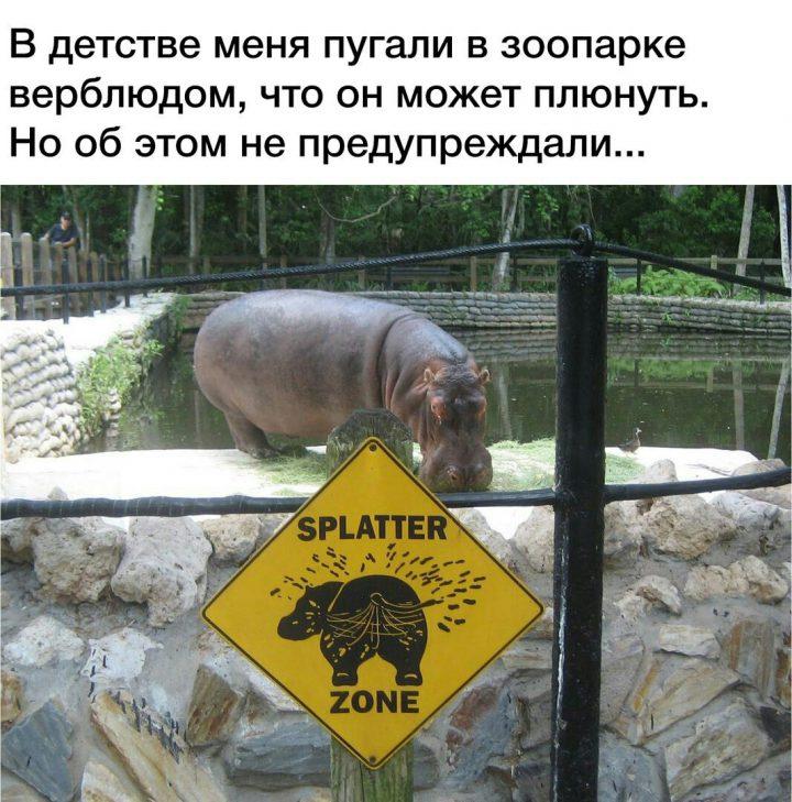 В детстве меня пугали в зоопарке верблюдом, что он может плюнуть. Но об этом не предупреждали...