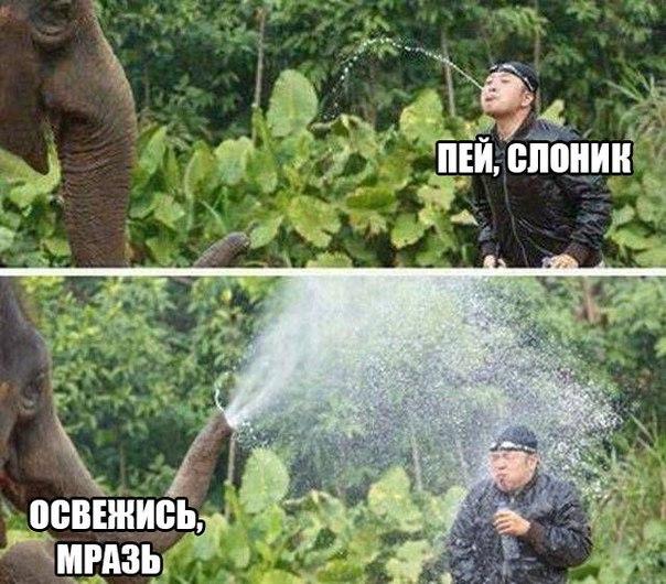 Пей, слоник-освежись, мразь.
